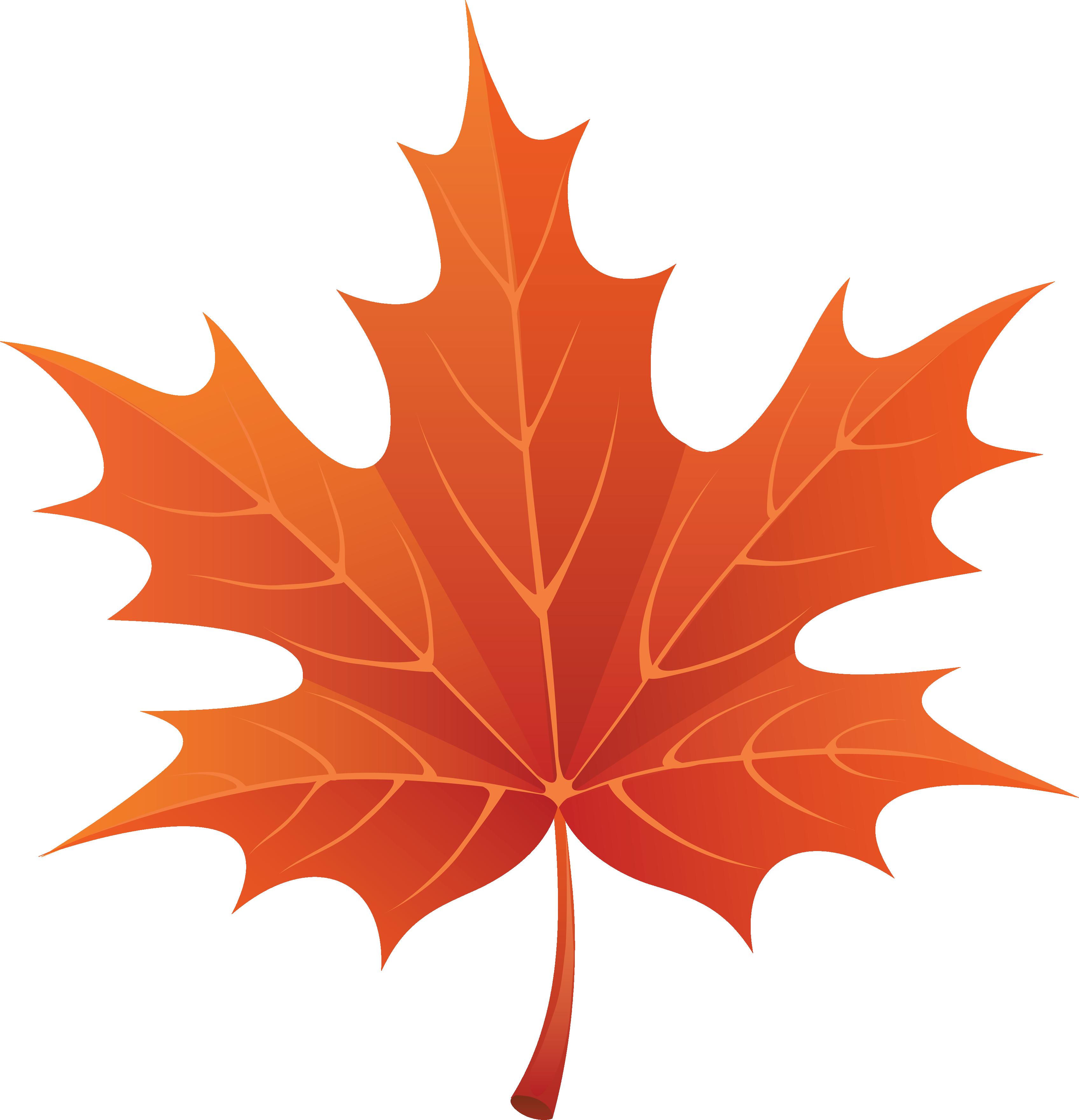 Leaf orange. Maple clipart free image
