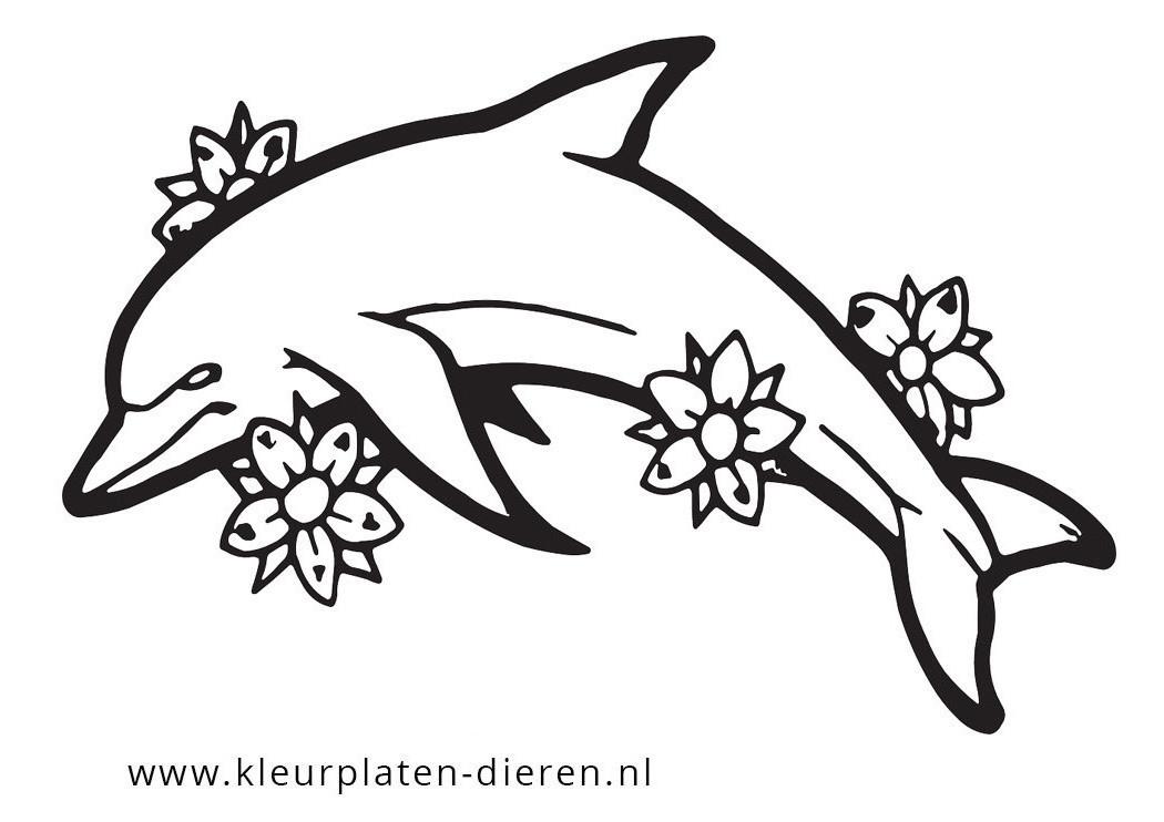 kleurplaten dolfijn