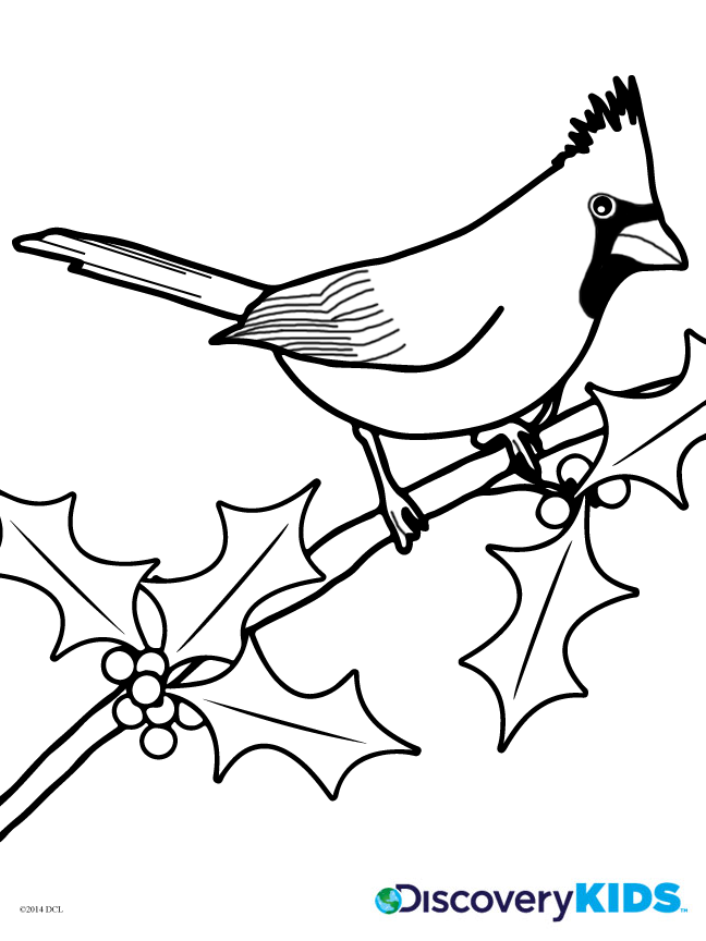 Cardinal Coloring Page Free Image