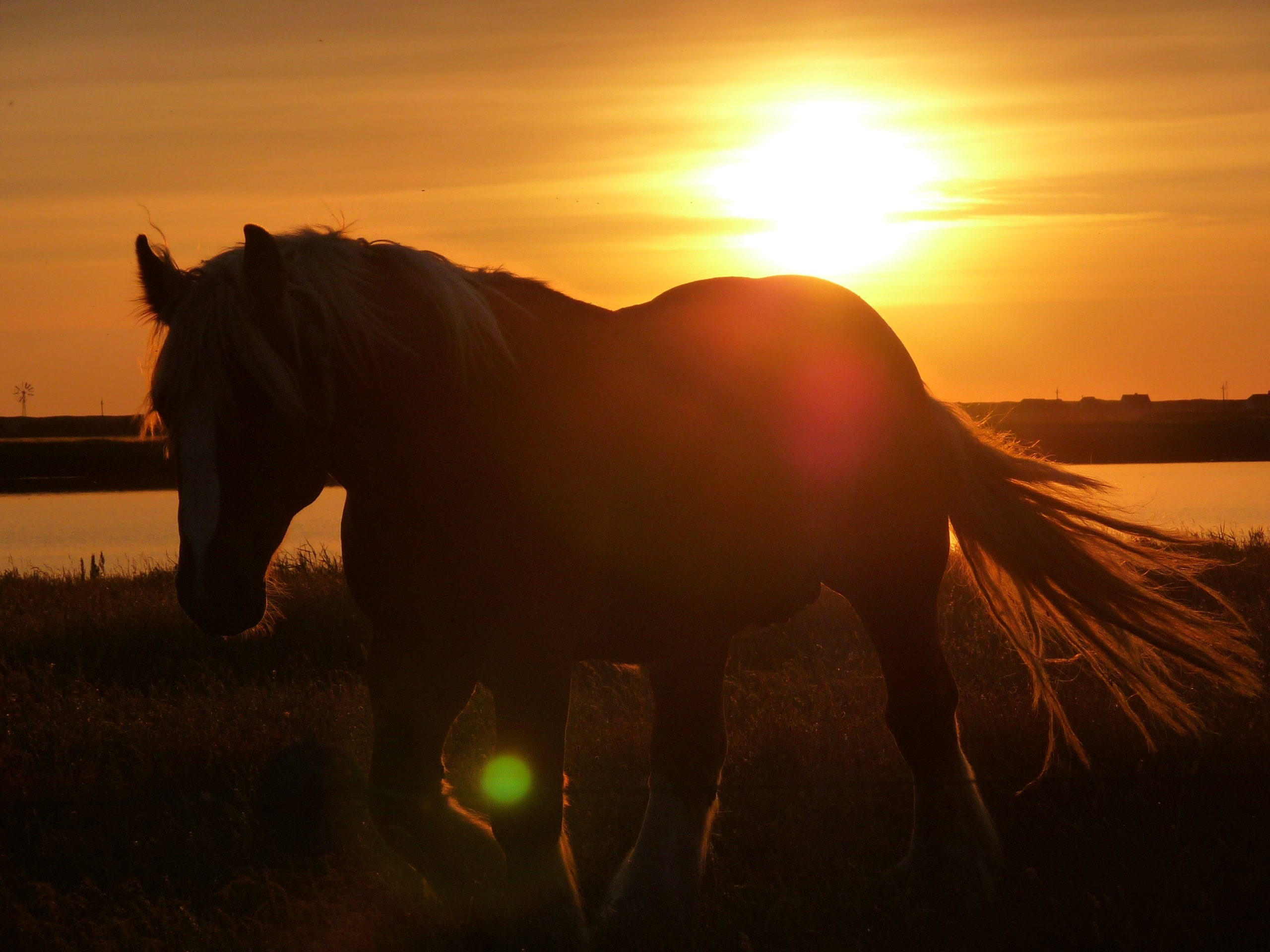 Beautiful Horse Is Running At Sunset Free Image