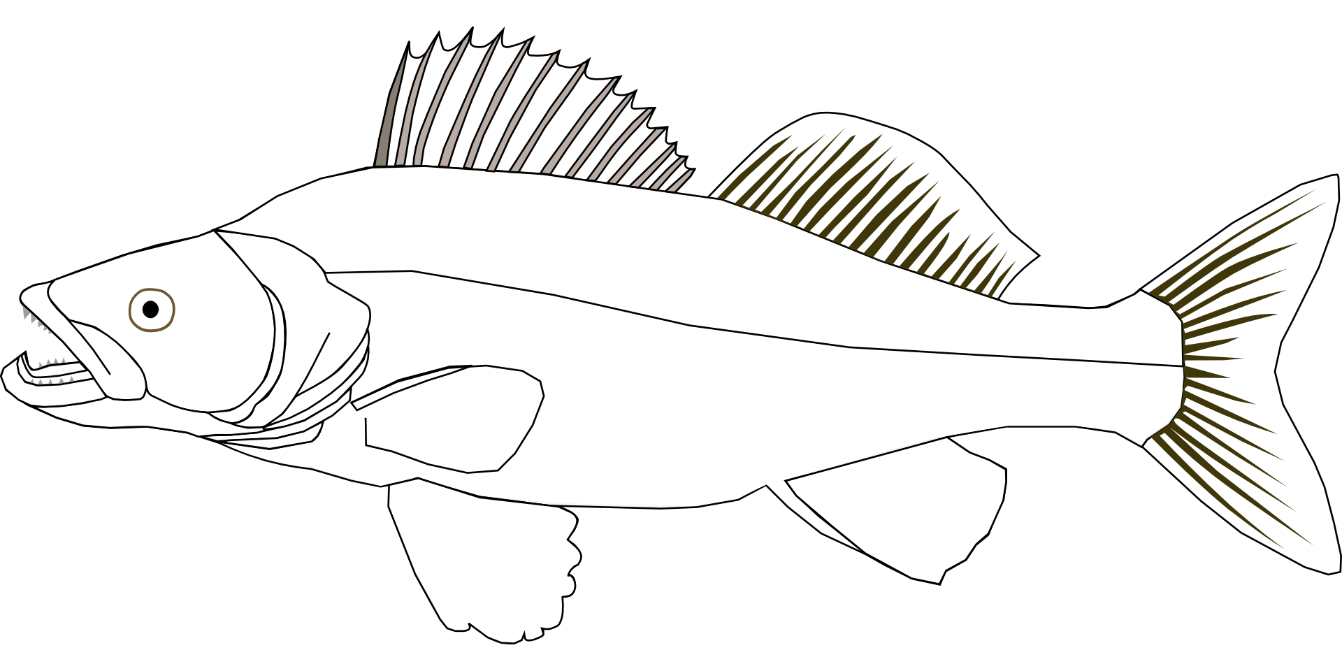 Free Walleye Cliparts, Download Free Clip Art, Free Clip Art on Clipart  Library