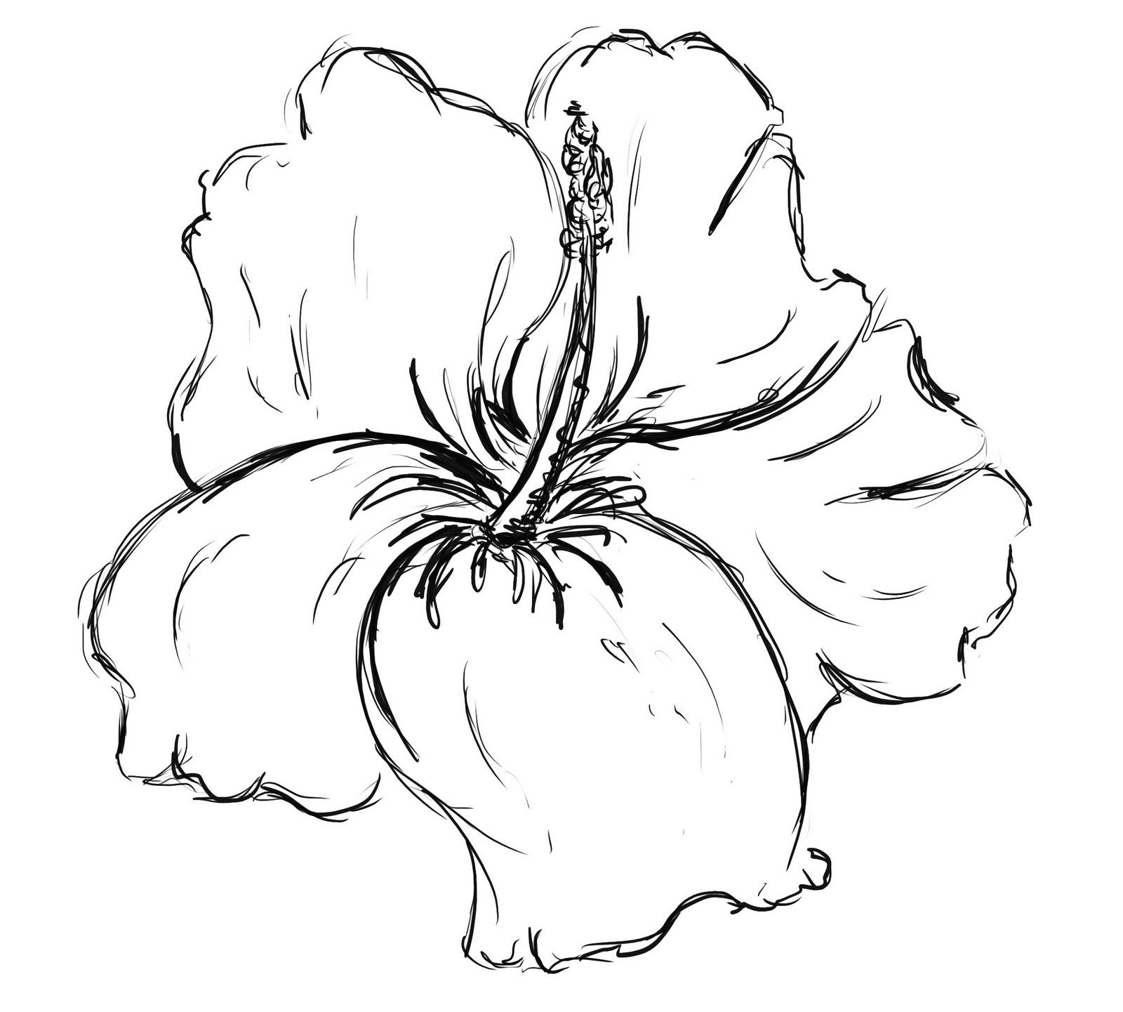 Hibiscus Flower Tattoo Drawings Free Image