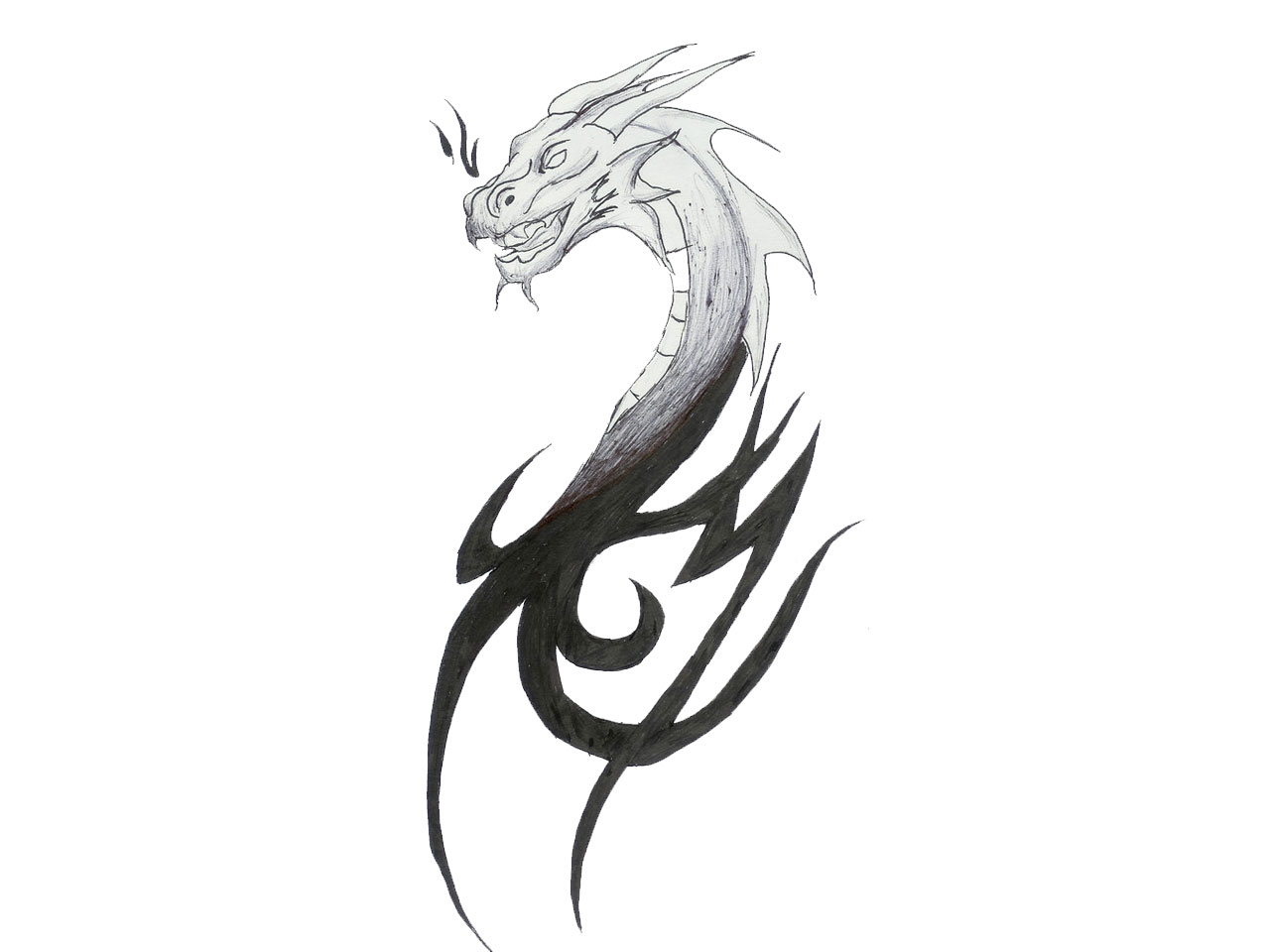 Tattoo Dragon Head Sketches free image