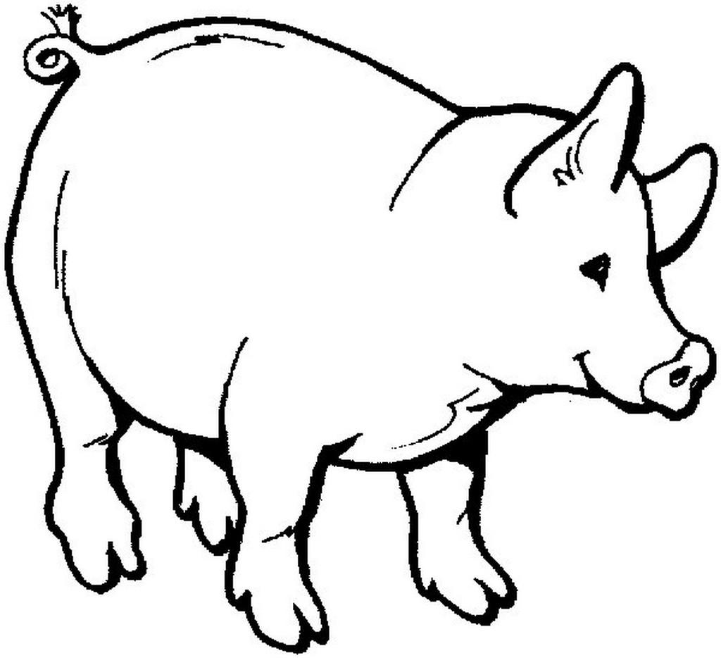 Schwein Ausmalen Bilder Foto 1024 X 934 Resolution Free Image