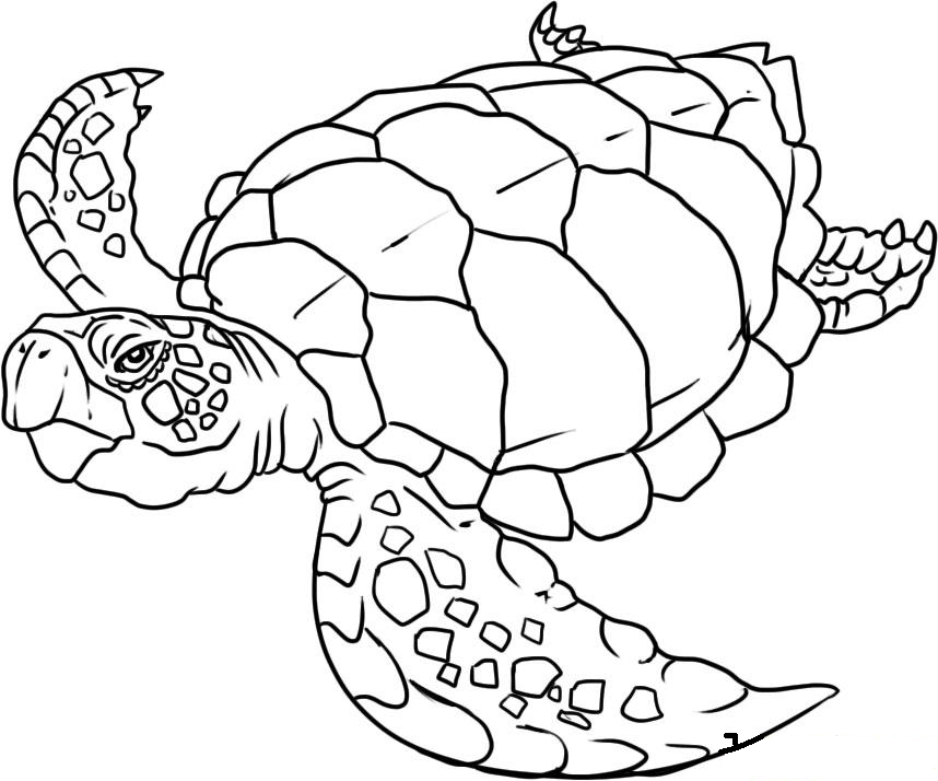 - Sea Animals Coloring Pages Drawing Free Image
