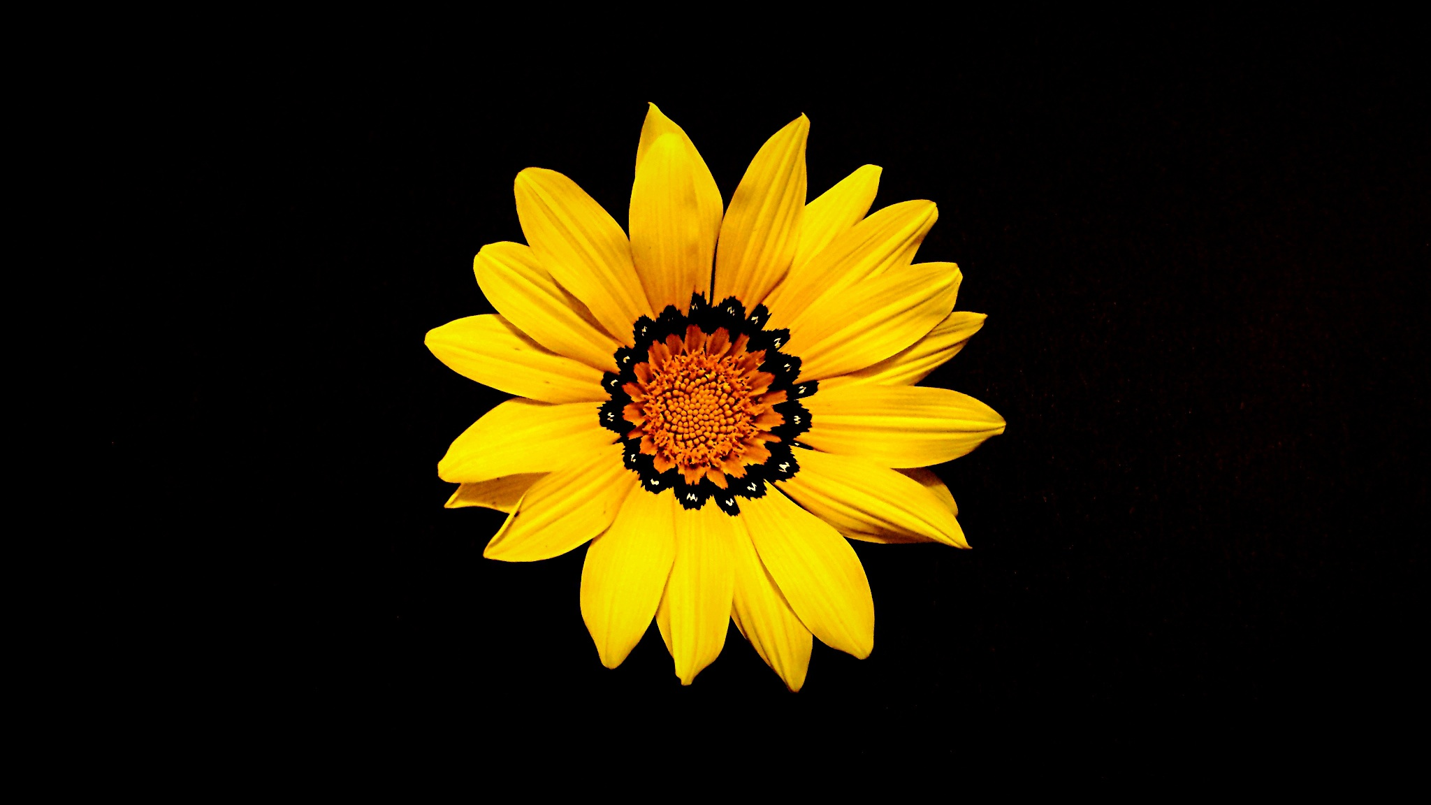 Yellow Bright Flower On Black Background Free Image