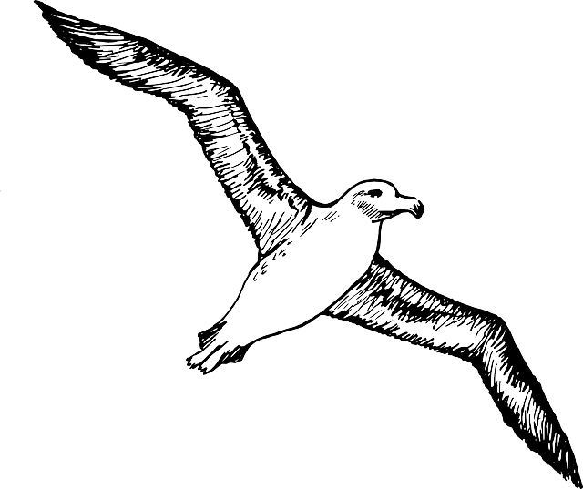 Sketch Silhouette Cartoon Page Bird Seagull Fly Free Image