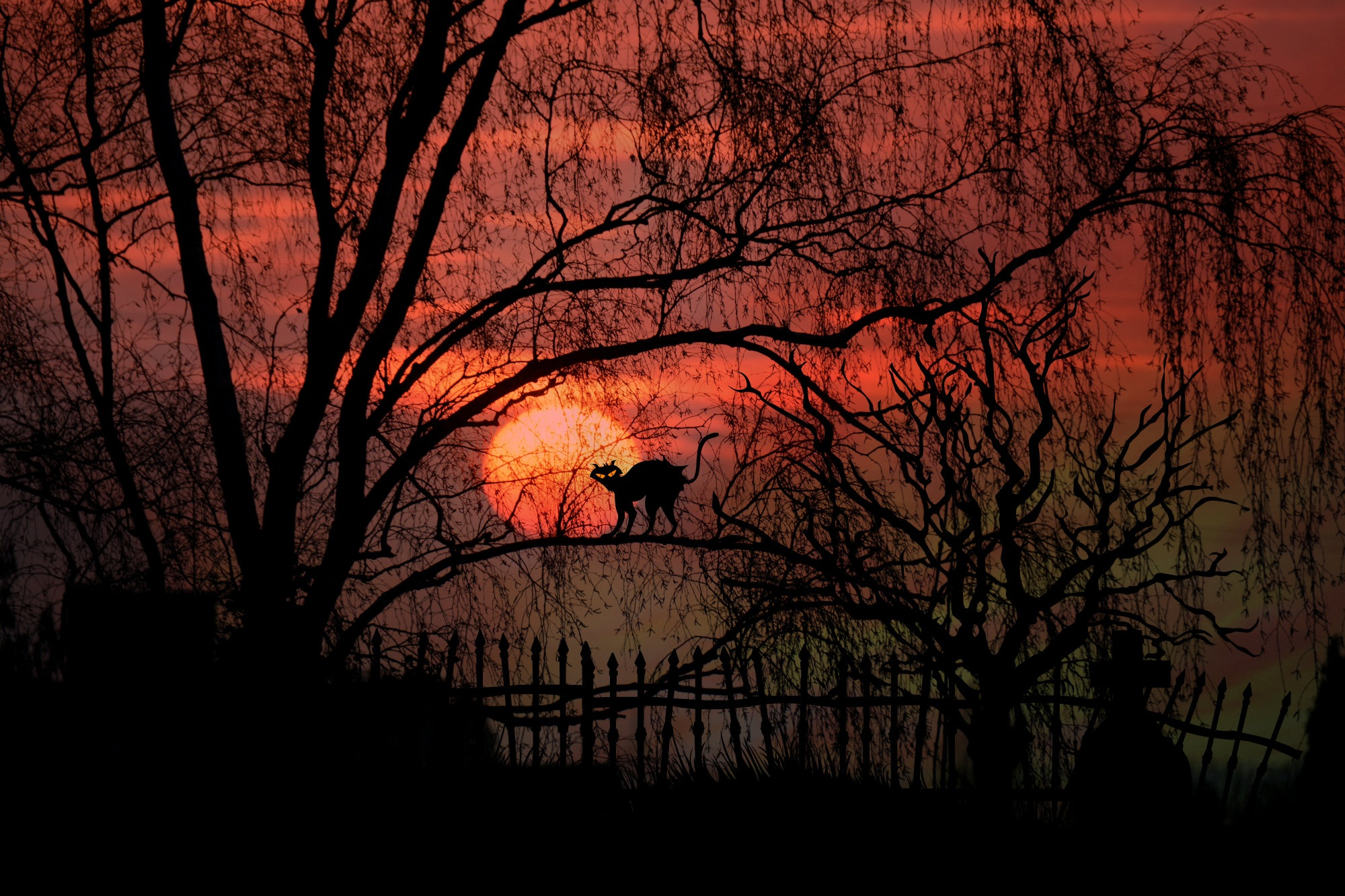 Black cat on a background of the red moon free image