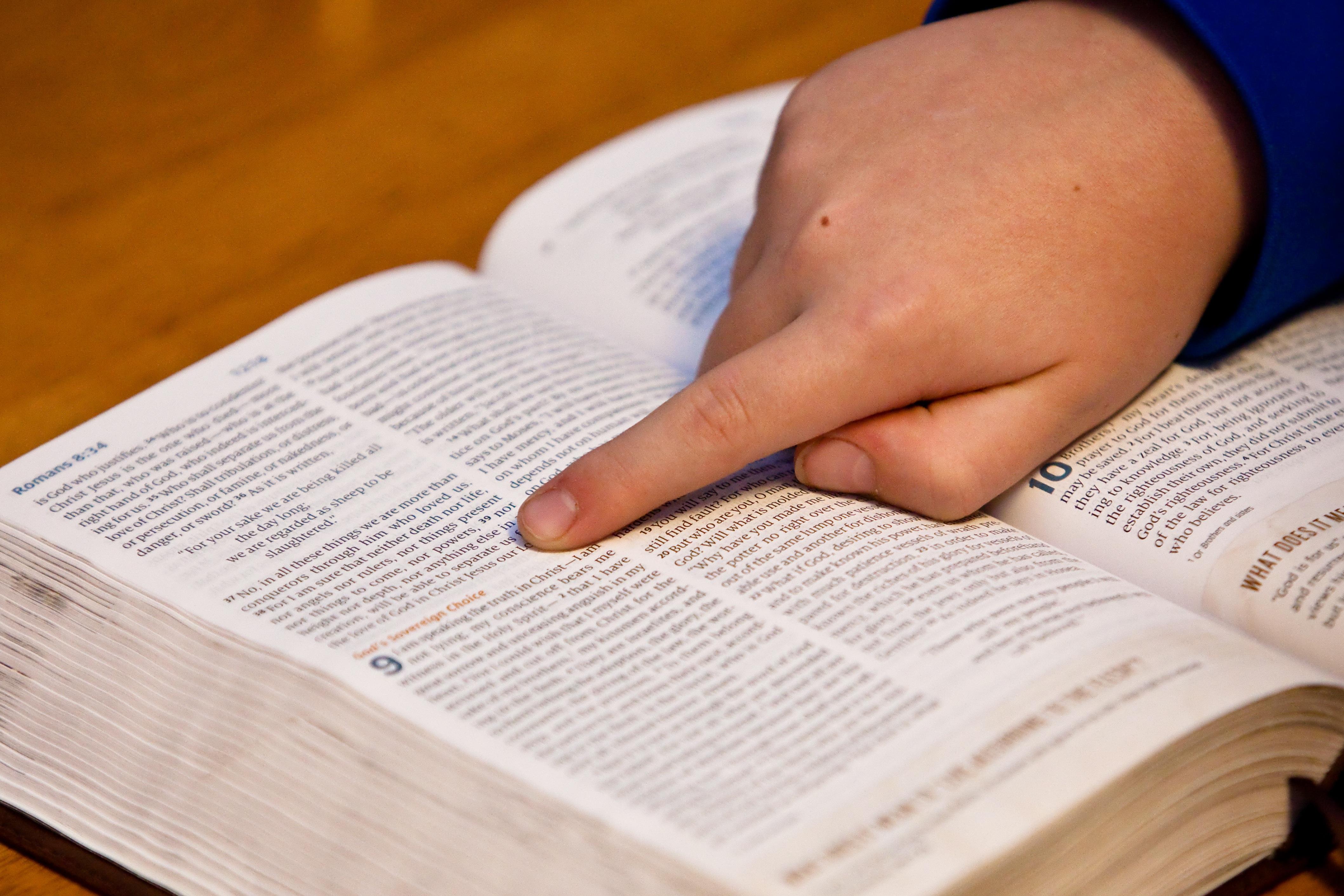 Bible Study Bible Hand Child free image
