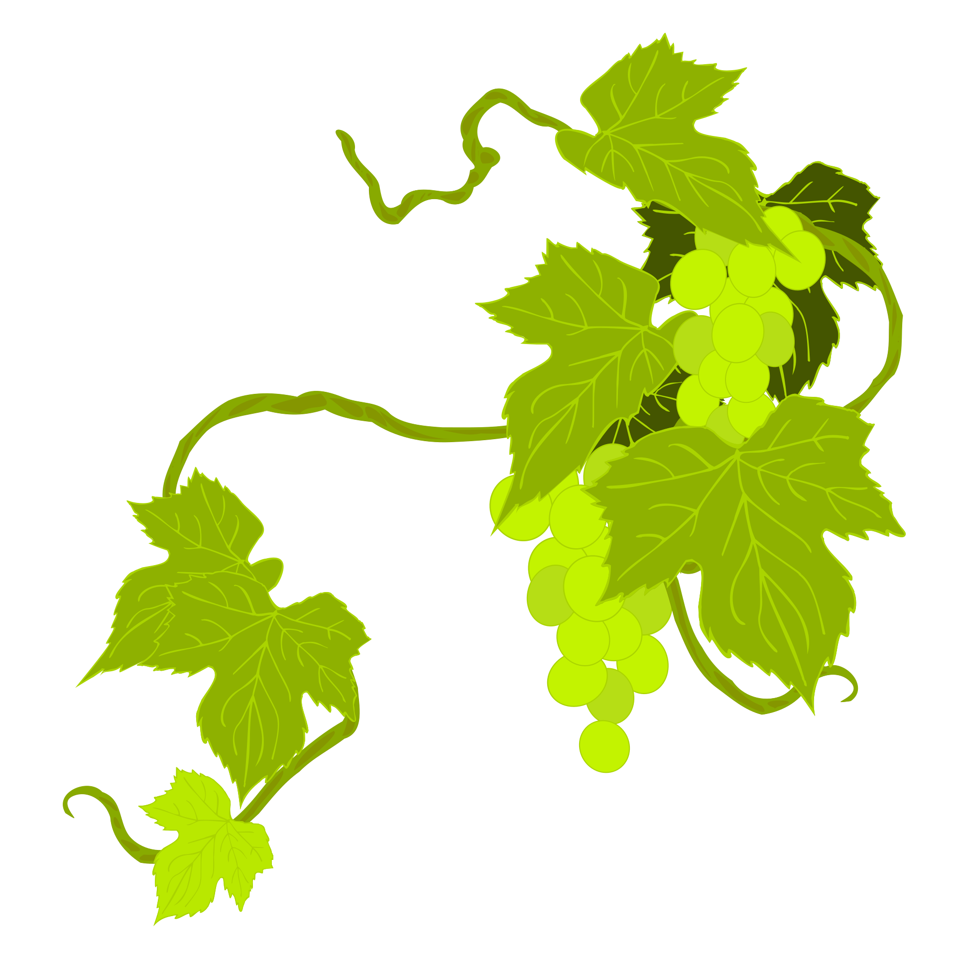 Grape Leaves On The Vine On A White Background Free Image
