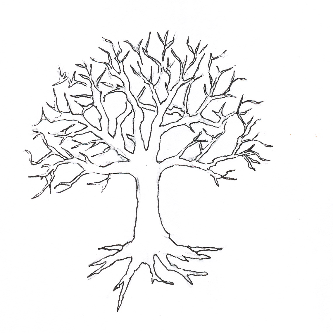 Bare Tree Coloring Page Free Image