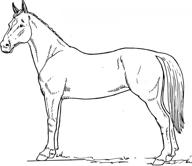Ausmalbilder Kostenlos Pferde 16 Free Image