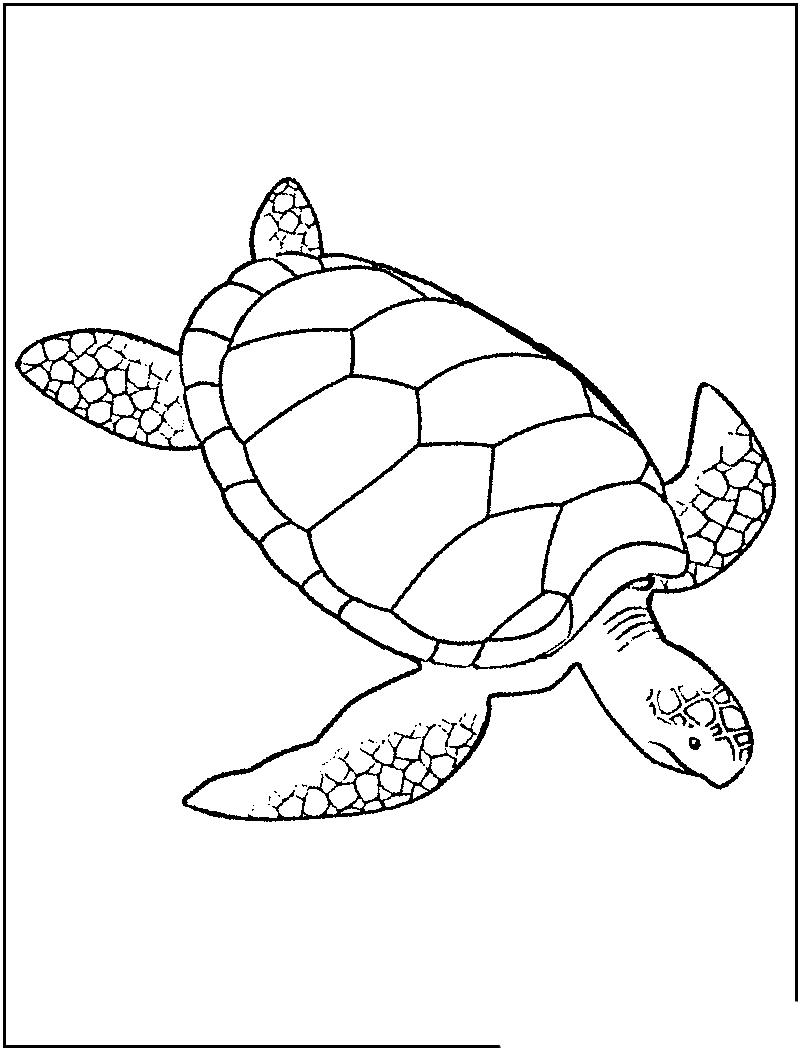 Dibujos De Tortugas Para Colorear Y Pintar Una Tortuga Marina Free Image