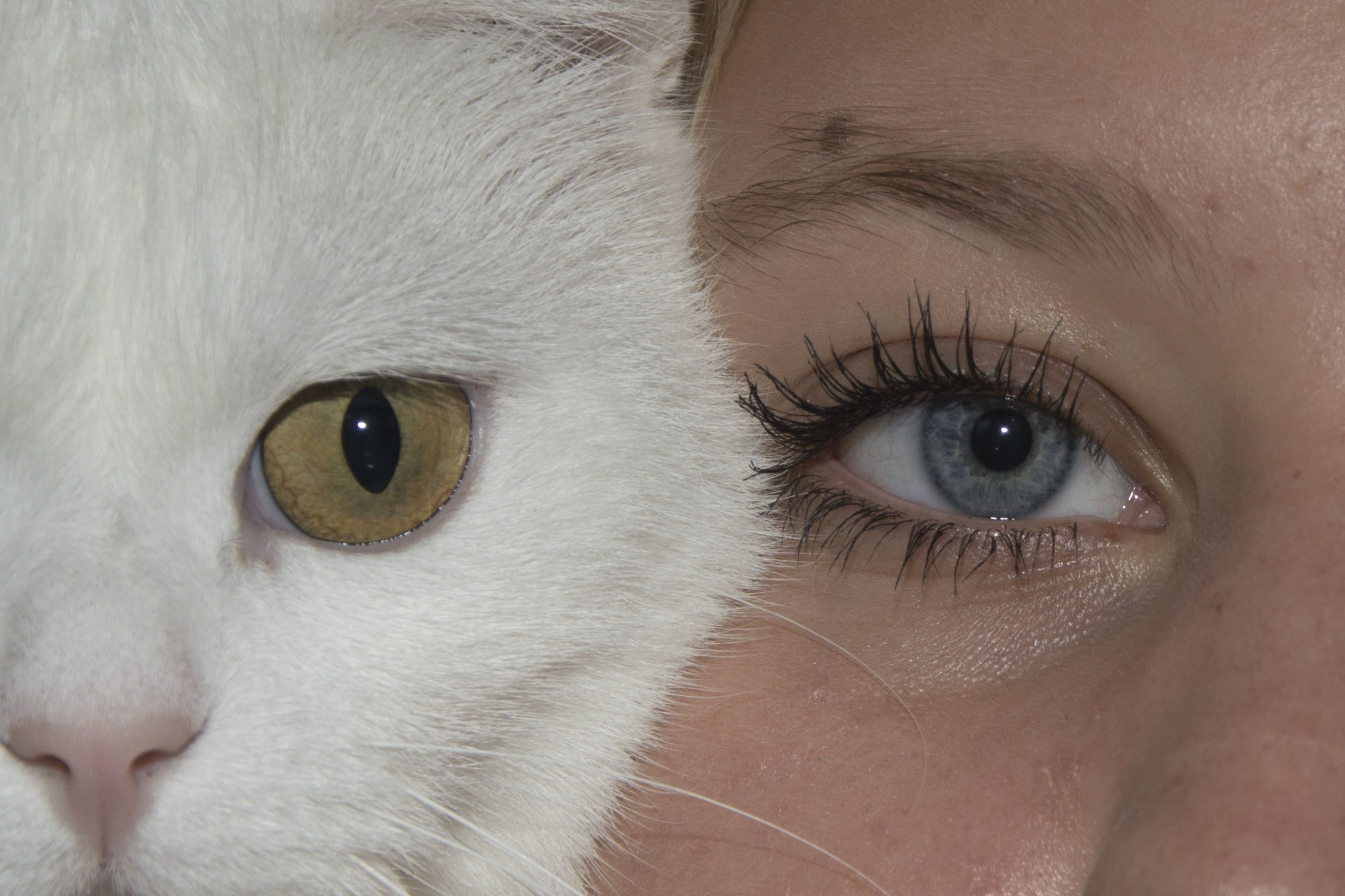 Cat with human eyes