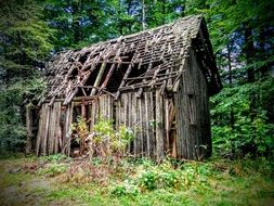 old ruined wooden hut in forest