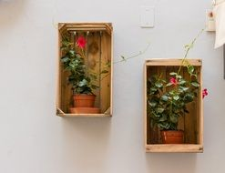 blooming potted plants in wooden boxes on wall, decoration