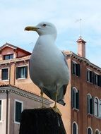 seagull sits on pillar in city, italy, venice