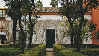 shrubs and trees at house with vines on facade, spain, seville