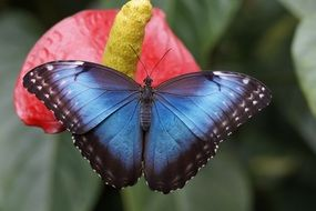 blue butterfly on the flower