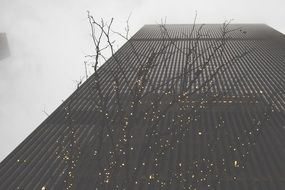 low angle view of illuminated tree at modern building facade