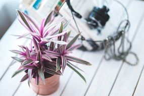 Colorful houseplant