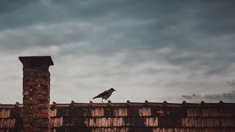crow walking on old tiled roof at cloudy sky