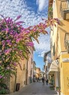 sirmione lake garda architecture pink flowers