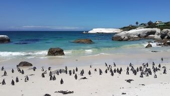 penguins beach tropical sand white