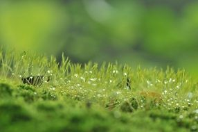 new green grass in dew drops on blurred background