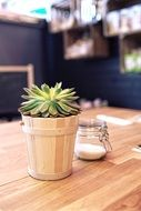 small succulent potted plant and sugar in jar on table