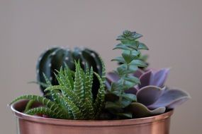potted plants, several succulents