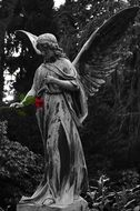 angel with rose, sculpture on cemetery