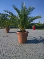 tropical palm plant casting hesse city