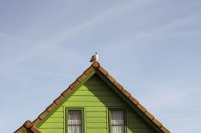 seagull sits on roof of village house, netherlands