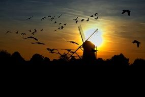 sunset windmill with many flying birds