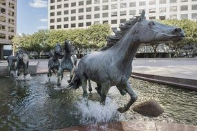 Mustangs at Las Colinas, bronze sculpture in fountain, usa, texas, Irving