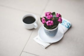 kalanchoe flower and cup of cofee
