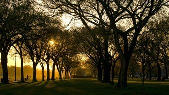 early morning in summer park, usa, columbia, washington dc