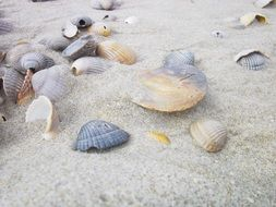 empty seashells on grey sand
