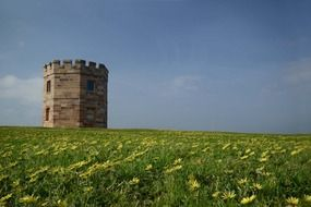 old Customs tower on beautiful blooming meadow, australia, sydney, la perouse
