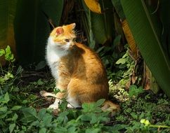 Red Cat sitting among tropical plants