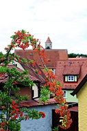 firethorn plant old town roofs