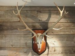 horns in a hunting lodge