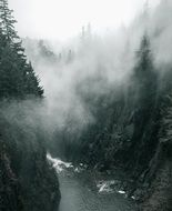 spruce forest on rock above mountain river in mist