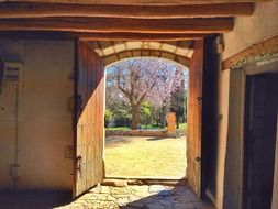 view of blooming tree in park through open door of old farmhouse, spain, catalonia