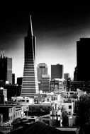 transamerica pyramid in black and white