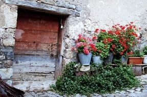 potted flowers at old stone wall