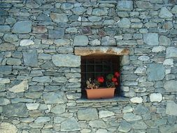 blooming potted geranium on grated window in stone wall