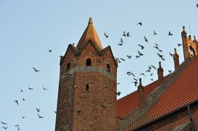 birds over the church tower in Poland