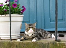 cat lying at entrance door beside of flowerpot